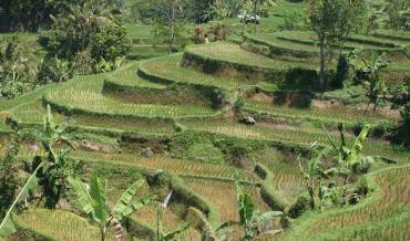 Beautiful Bali rice terraces