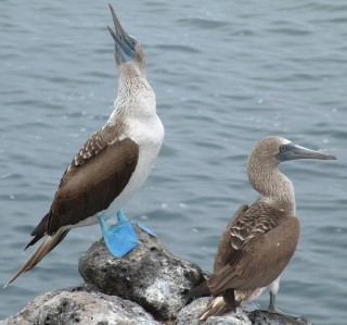 The Blue footed boobies were so cute!