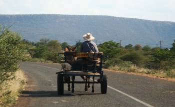 Donkey Cart.  Watch out for slow traffic in Botswana!