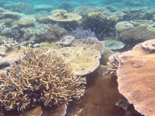 Colorful corals off Treasure Island