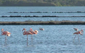 Wild flamingos at a preserve