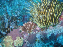 Not all undersea beauty is in fish; corals, feather stars, and algae come in amazing colors and shapes