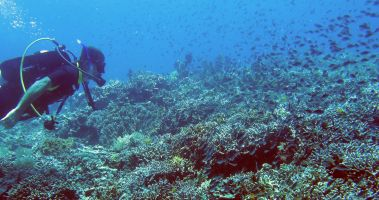 Jon dives with a gazillion reef fish, Misool, Raja Ampat