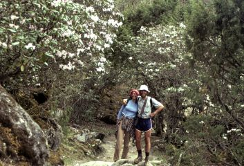 Hiking under rhododendron forest in 1980