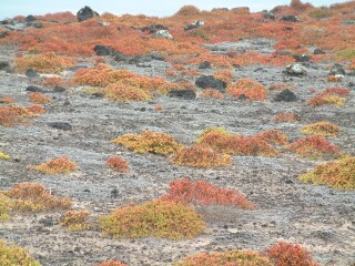 Red, orange, green, and gold groundcover reminded us of fallen leaves