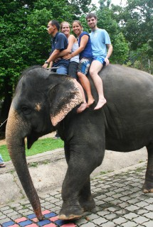 Hi Ho away they go elephant riding