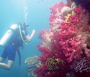 Rachel shoots soft coral bommie pictures, Little Komodo, Triton Bay