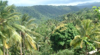 Dominica's lush and gorgeous tropical rainforest
