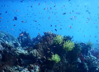 The Maratua reef sparkles with fish