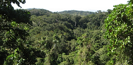 Lush rainforest covers Mont d'Ambre National Park in N. Madagascar