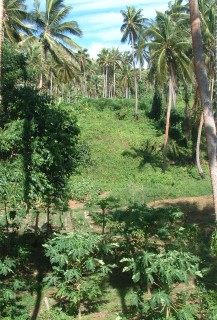 Sakay's plantation of fruits and vegetables covers whole hillsides.
